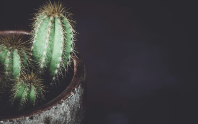 Cactus Blog Post 1_Mairead